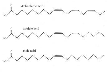 fatty-acid.jpg